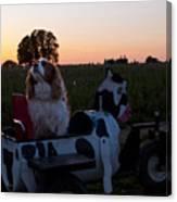 Dog In Cow Wagon  Canvas Print