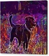 Dog Labrador Animal Canidae Canine  Canvas Print
