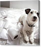 Dog Lying On Bathroom Floor Amongst Shredded Lavatory Paper Canvas Print