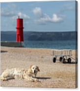 Dog Lying On The Beach In Front Of Red Lighthouse Of Cres Canvas Print