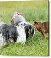 Dog Meeting  Canvas Print