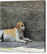 Dog Next To A Wall Canvas Print