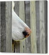 Dog Nose Canvas Print