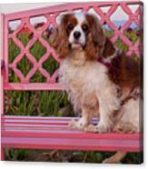 Dog On Pink Bench Canvas Print