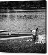 Dog On The Lake #2 Canvas Print