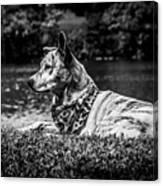 Dog On The Lake Canvas Print