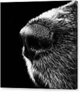 Dog Smeller Canvas Print