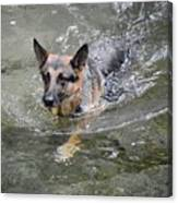Dog Swimming In Cold Water Canvas Print