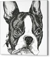 Dog Tags Canvas Print