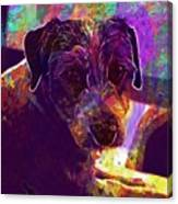 Dog Terrier Russell Pet Animal  Canvas Print