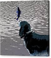 Dog Vs Perch 3 Canvas Print