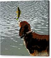 Dog Vs Perch 4 Canvas Print