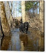 Dog Wading In Swollen River Canvas Print