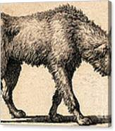 Dog With Rabies, Engraving, 1800 Canvas Print