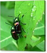 Dogbane Beetles Canvas Print