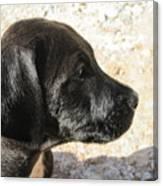 Doggi Canvas Print