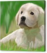 Doggie Seems Sad Canvas Print