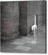 Doggie Strolling 1 Canvas Print