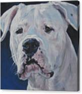 Dogo Argentino Canvas Print