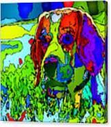 Dogs Can See In Color Canvas Print