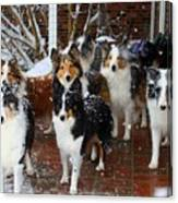 Dogs During Snowmageddon Canvas Print
