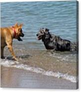 Dogs In Lake Michigan Canvas Print