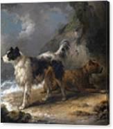 Dogs On The Coast Canvas Print