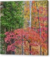 Dogwood And Cedar Canvas Print