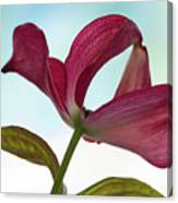 Dogwood Ballet 3 Canvas Print
