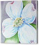 Dogwood Bloom Canvas Print
