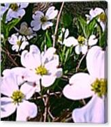 Dogwood Blossoms Pair Up Canvas Print