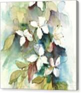 Dogwood Branch Canvas Print