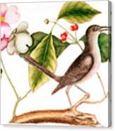Dogwood  Cornus Florida, And Mocking Bird  Canvas Print