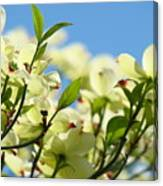 Dogwood Flowers Art Prints Canvas White Dogwood Tree Blue Sky Canvas Print