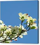 Dogwood Flowers Art Prints White Flowering Dogwood Tree Baslee Troutman Canvas Print