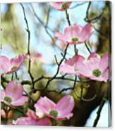 Dogwood Flowers Pink Dogwood Tree Landscape 9 Giclee Art Prints Baslee Troutman Canvas Print