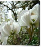 Dogwood Flowers White Dogwood Trees Blossoming 8 Art Prints Baslee Troutman Canvas Print