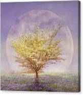 Dogwood In The Lavender Mist Canvas Print
