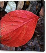 Dogwood Leaf Canvas Print
