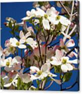 Dogwood Sky Canvas Print