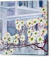 Dogwood Time In Oldtown Canvas Print