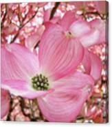 Dogwood Tree 1 Pink Dogwood Flowers Artwork Art Prints Canvas Framed Cards Canvas Print