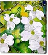 Dogwood Tree Flowers Canvas Print