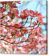 Dogwood Tree Landscape Pink Dogwood Flowers Art Canvas Print