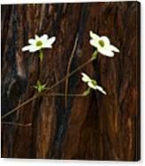 Dogwoods And Bark Canvas Print