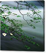 Dogwoods And Merced River Canvas Print
