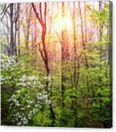 Dogwoods In The Forest Canvas Print