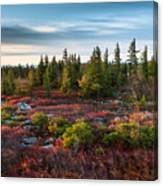 Dolly Sods Wilderness Area West Virginia Canvas Print