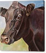 Dolly The Angus Cow Canvas Print