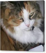Dolly The Grumpy Cat Canvas Print
